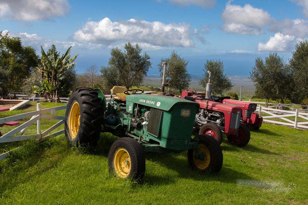 Kula Country Farm Maui photography by Aloha Images and Designs